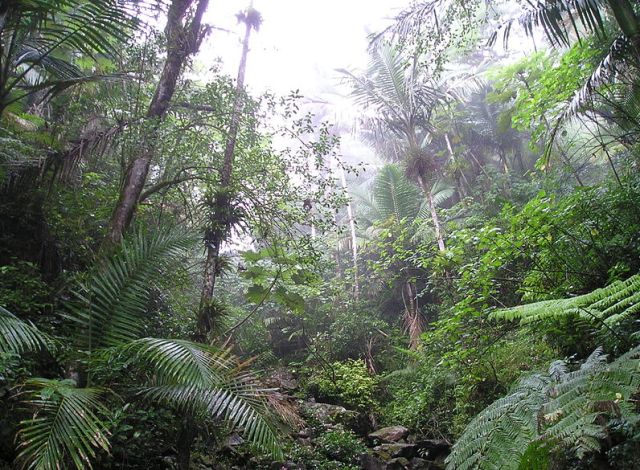 Caribbean National Rain Forest of El Yunque, Puerto Rico (photo by Alessandro Cai)